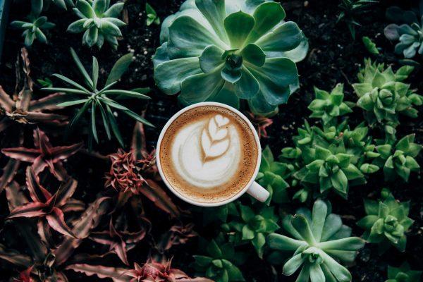 Beautiful botanical coffee decoration